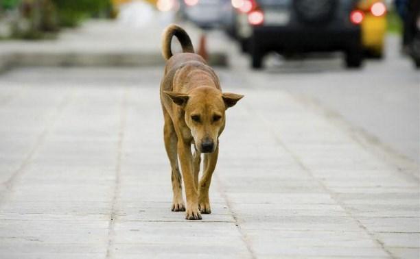 Туляки сообщают о массовом убийстве собак и кошек