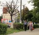 Туляки бьют тревогу: в городе гибнут липы