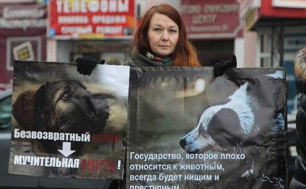 В Туле пройдет митинг в защиту бездомных животных
