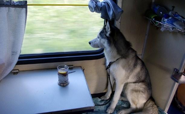 Россияне могут купить электронный билет на поезд для домашних животных