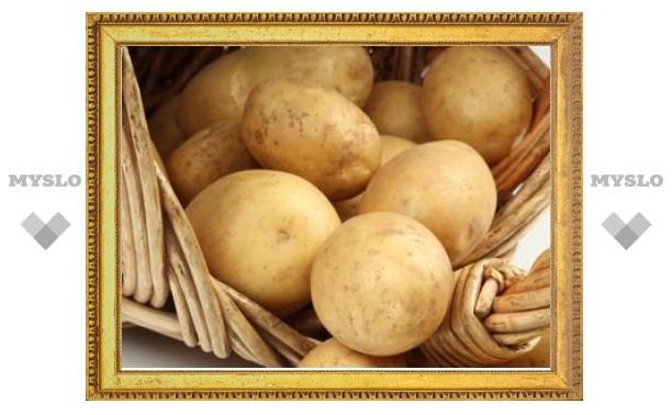 Засуха на треть сократит урожай картошки