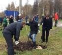 В Пролетарском парке высадили деревья