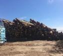 В Большой Еловой под Тулой обнаружили сомнительную лесопилку