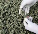 Тульские полицейские изъяли рекордную партию марихуаны