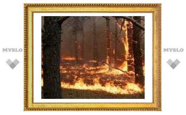 Под Тулой вспыхнул лес