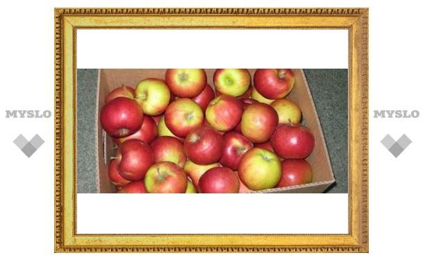 Под Тулой пойман яблочный вор