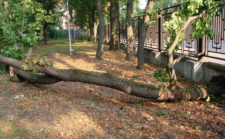 В ЦПКиО имени Белоусова упавшее дерево придавило случайных прохожих