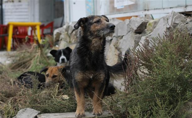 В Туле появится приют для бездомных животных