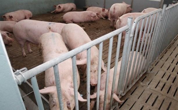 «Лазаревское» планирует продавать мясо не только в России, но и за рубежом
