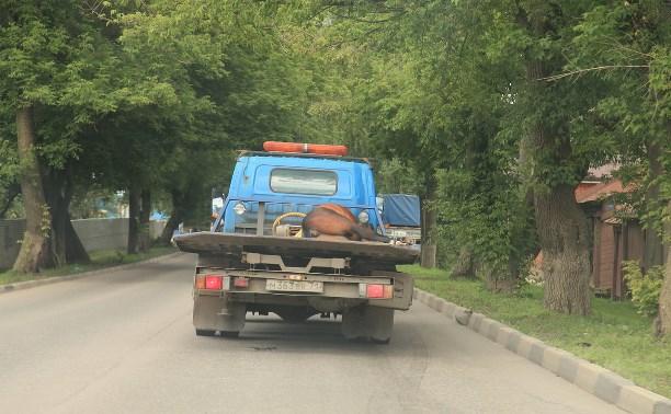 Погибшую лошадь увезли с места ДТП на эвакуаторе