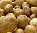 Жителя Плавского района осудят за кражу картофеля