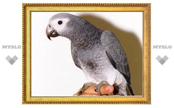 Помогите найти попугая!