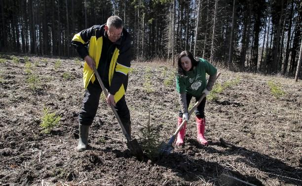 Депутаты Тульской облдумы посадили 150 молодых елей в Ясной Поляне