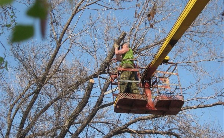 Прокуратура возбудила уголовное дело из-за смерти рабочего во время опиловки деревьев