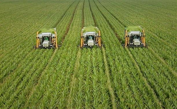 Россельхозбанк в 1,5 раза увеличил объем кредитования сезонных работ