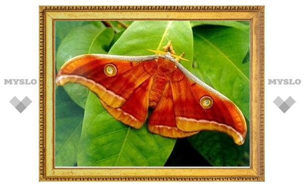 В экзотариуме можно понаблюдать за рождением экзотических бабочек