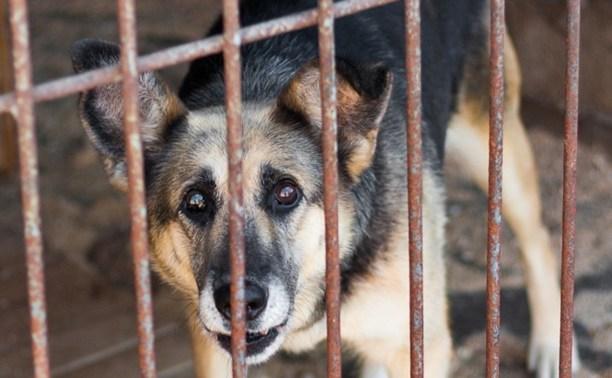 У туляков выманивают деньги на помощь лжеприюту для животных