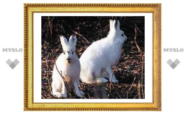 4 марта: Встретил белого зайца - быть снегу