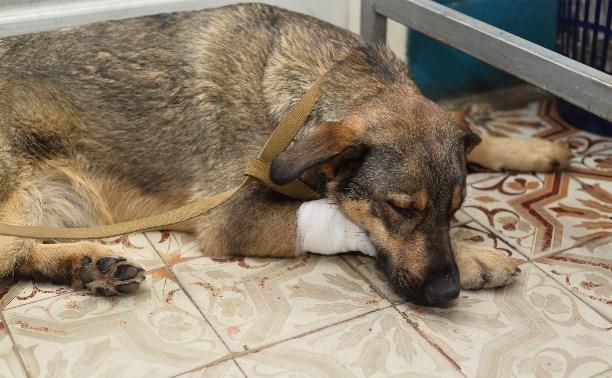 Областная ветеринарная станция приглашает на день открытых дверей
