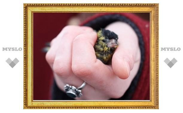 В весенних лужах остались десятки мертвых птиц