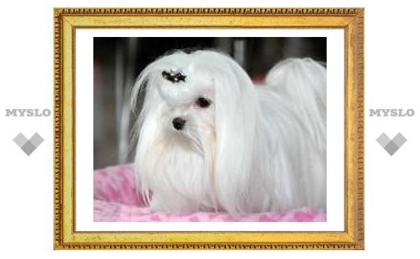 В Туле пройдет выставка собак