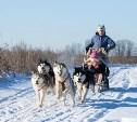 «Большой тур» на Куликовом поле: собачьи упряжки, отливка пуль и катание на лошадях