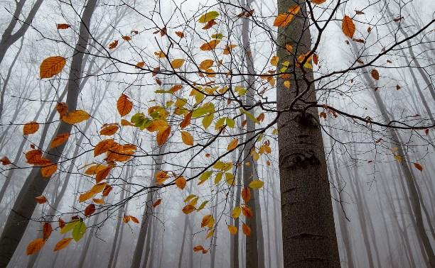 Какая погода ждёт туляков 11 ноября