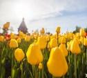 Ко Дню Победы в Туле расцветут 58 тысяч тюльпанов