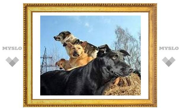 В Туле построят собачий приют