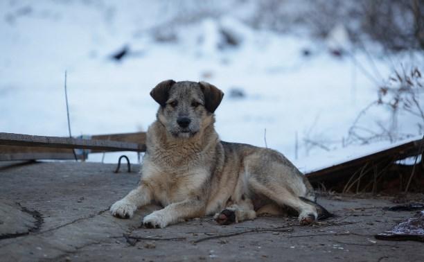 В Тульской области проводится месячник льготной стерилизации животных