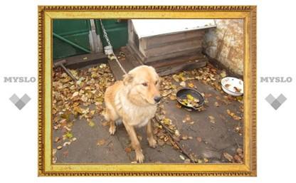 Тульская полиция проводит дополнительную проверку по факту убийства собаки