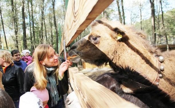 В Новомосковске открылся мини-зоопарк