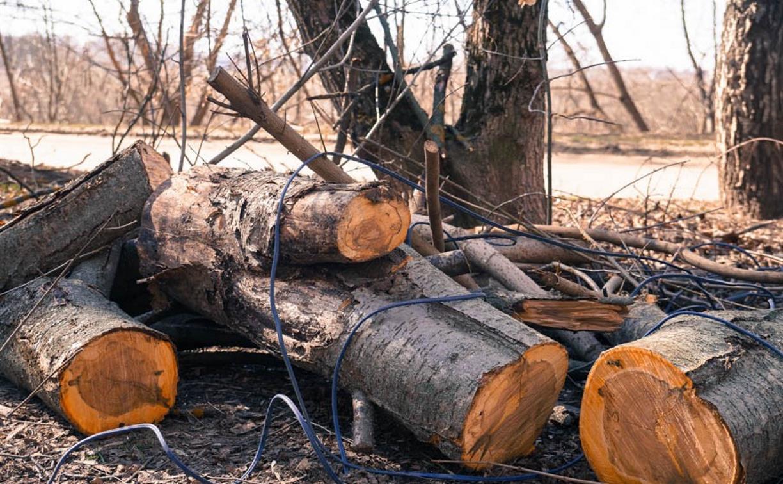В Чернском районе гражданин Латвии незаконно вырубил леса на 31 млн рублей