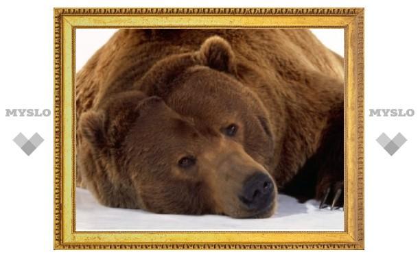 Жителей Якутии призвали не есть медвежатину