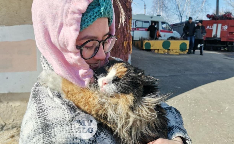 На пожаре в Менделеевском спасли трехцветную котейку