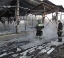 Поджигателей конюшни, в которой заживо сгорели 10 лошадей, объявили в розыск