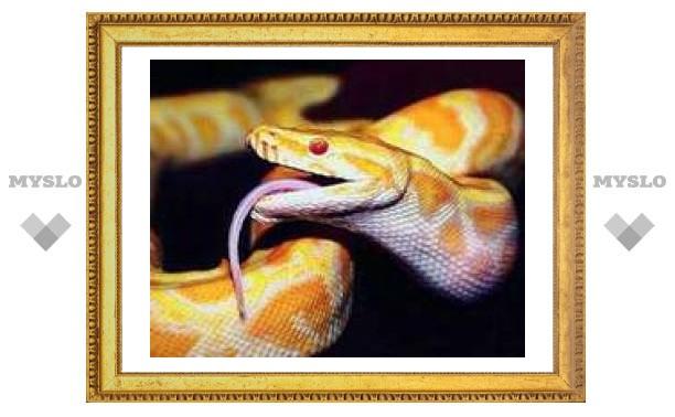 Тулякам расскажут всю правду о змеях