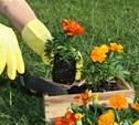 Садовые товарищества Тульской области получат поддержку