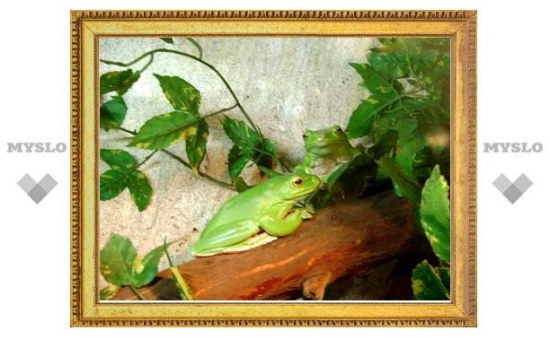 В Туле появится лягушачья семья!