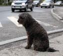 Жителя Киреевска посадили на трое суток за сбитую собаку