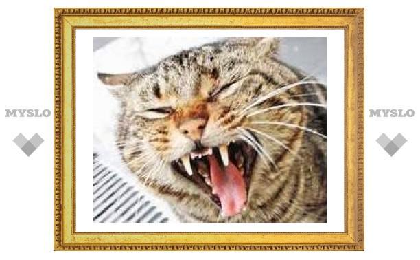 В Туле кот отравился антисексуальными таблетками
