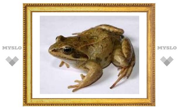 В Тульском экзотариуме пройдет выставка лягушек
