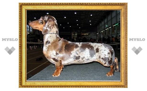 В Тулу съедутся лучшие собаки России