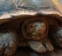 Конкурс от Тульского экзотариума: огромную черепаху назвали Потемкиным