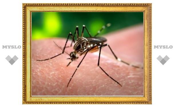 Комары-мутанты помогут бороться с лихорадкой денге