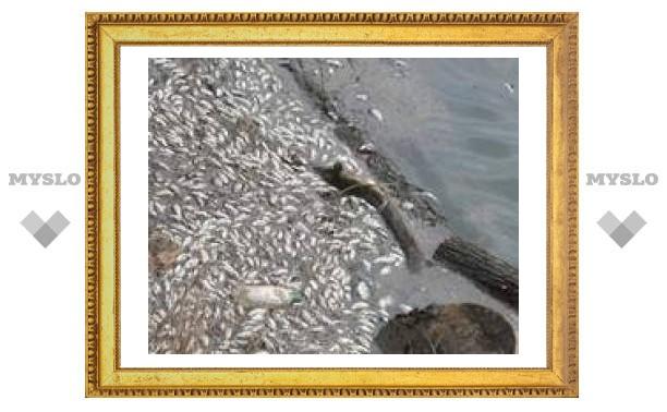 Почему в тульских водоемах гибнет рыба?