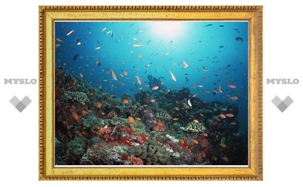 Завершен первый этап создания крупнейшей в мире подводной обсерватории