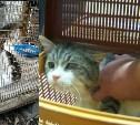 Адвокат заявил о подмене тульского кота-наркокурьера в суде