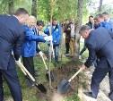 В «Партизанской деревне» высадили аллею плакучих ив