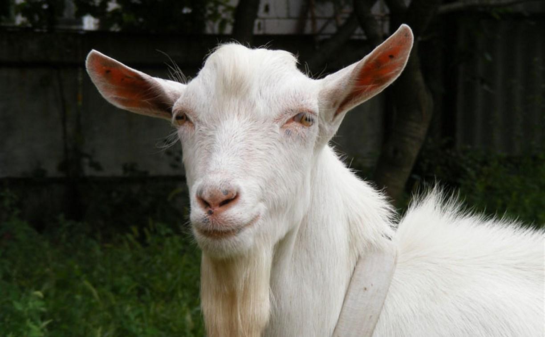 В Тульской области у женщины украли козла